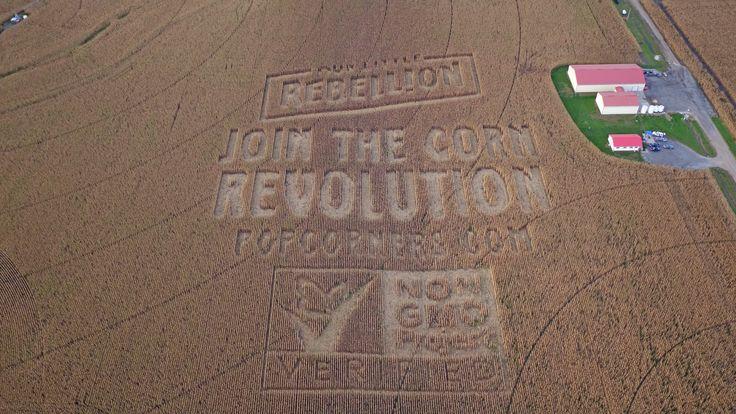 Non-GMO Corn Crop Circles Pop Up in Nebraska