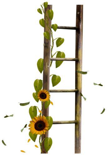 sunflower ladder