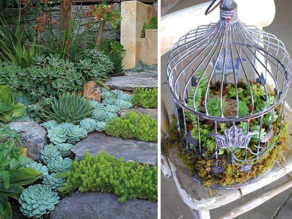 12 Pinteresting Ways To Display Succulents Groen Pinterest Garden And Art