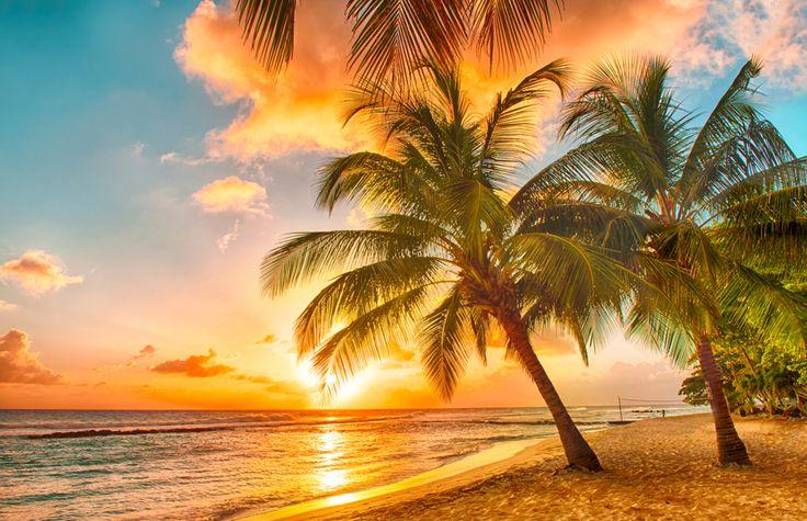 「ヤシの木 夕日」の画像検索結果