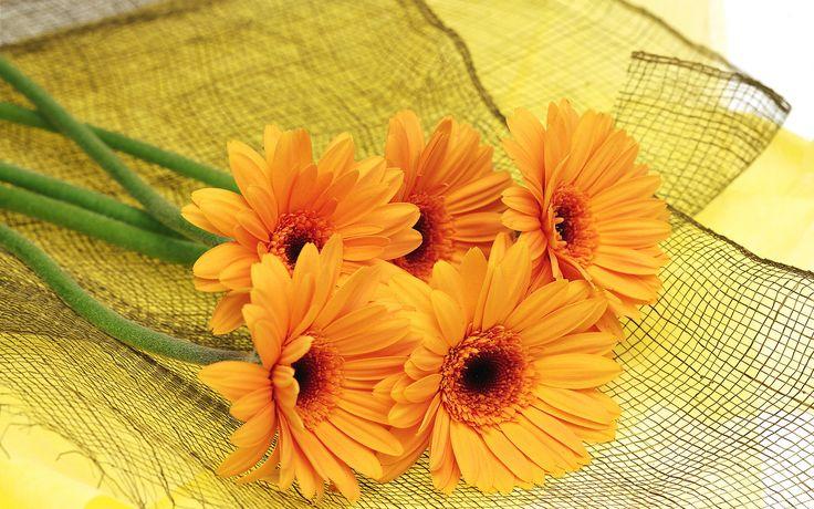 lovely orange flowers wallpaper 10460