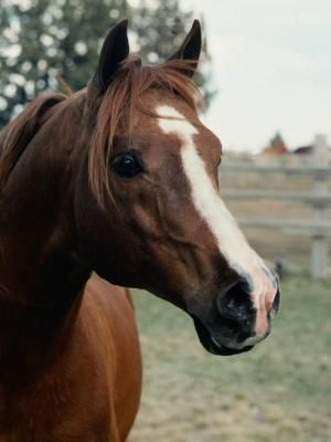 Working with horses provides healing therapy for individuals with mental, physical and emotional conditions.