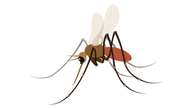 Mosquitoes are the chief disseminator of malaria, dengue fever and the West Nile and Zika viruses. They are deadlier than sharks and snakes. So how is it that this fearsome creature has no emoji?