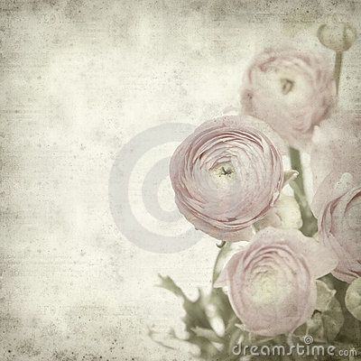 Textured old paper background with  ranunculus