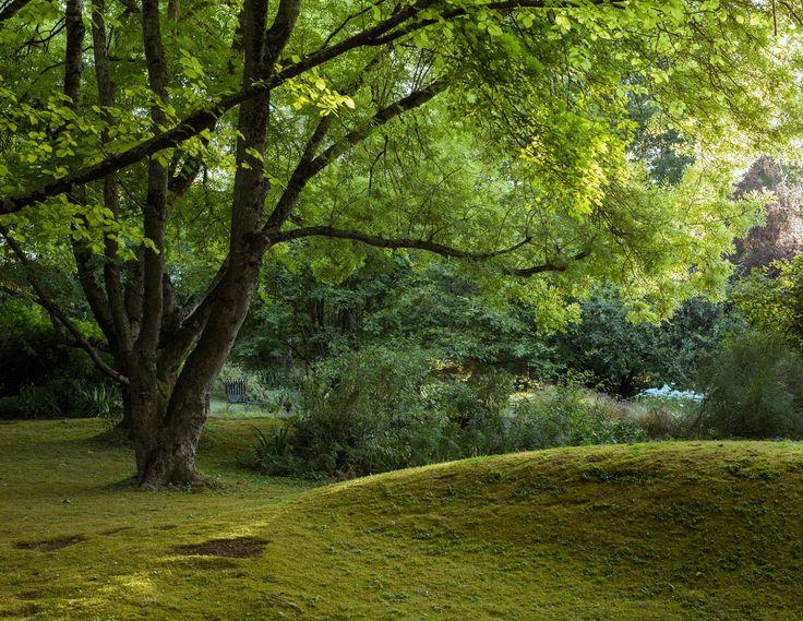 Edna's moss mound