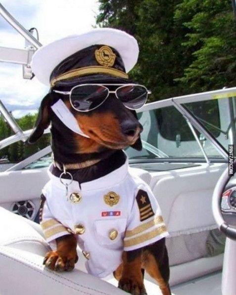 Captain - The Best Dog Costumes on Instagram - Photos