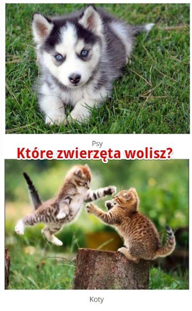 Które zwierzęta wolisz? http://www.ubieranki.eu/quizy/co-wolisz/422/ktore-zwierzeta-wolisz_.html