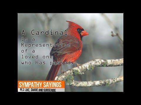 Sympathy Sayings | Sympathy Quotes | Sympathy Verses