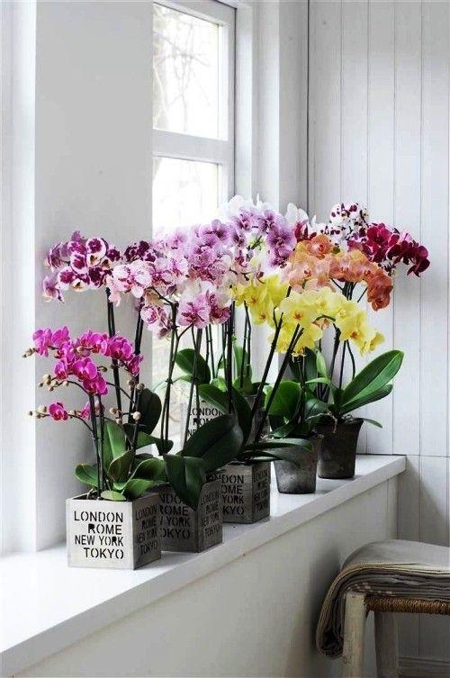 Orchideen Pflege Tipps und Wissenswertes über die exotischen Schönheiten