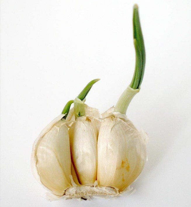 10 vegetables and herbs you can buy once and regrow forever.