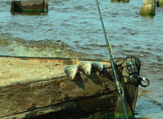 АНАЛИЗ ОШИБОК НАЧИНАЮЩИХ СПИННИНГИСТОВ    Не ошибается тот, кто ничего не делает. Эта простая истина касается всех сфер нашего бытия, включая и рыбалку. Свою первую ошибку в ловле на спиннинг и вы, и я допустили не позднее, чем на первой рыбалке. А возможно, даже и раньше - когда подбирали снасть для того чтобы освоить ловлю хищной рыбы на спиннинг ...    Я не ставлю сейчас перед собой цель максимально подробно разобрать все те ошибки, которых многим из нас не удается избежать на рыбалке…