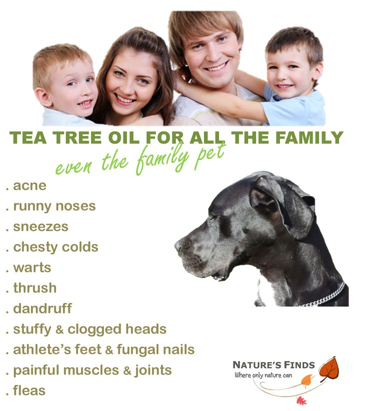 """The whole family can benefit from using tea tree oil, even our Great Dane """"Duke"""" who has his bed washed with a few drops of tea tree oil to eradicate those biting fleas. Sold worldwide by Nature's Finds."""