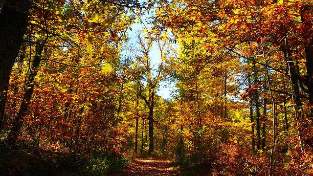 #OtoñoMágico La magia del otoño y sus colores en la caminata de Hervás a Segura de Toro PB242839 | Flickr: Intercambio de fotos