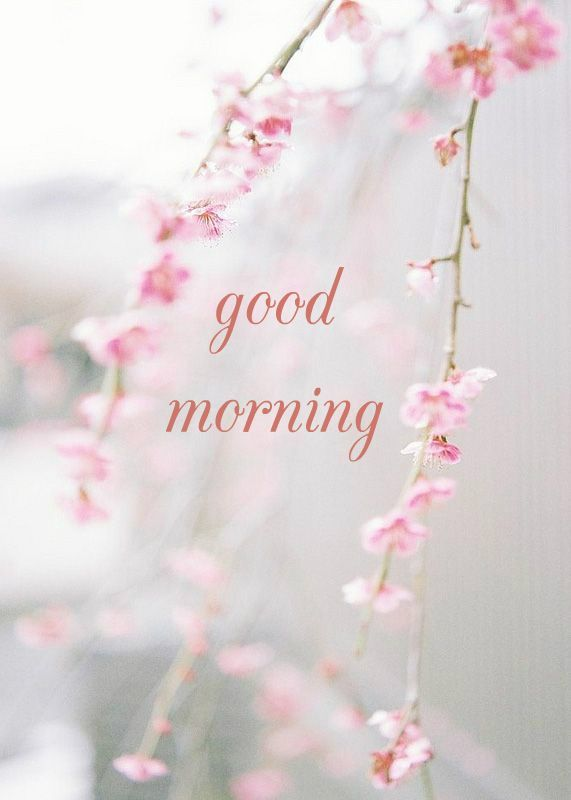 Good Morning Wishes With Beautiful Flowers Images : Best images about positive quotes on pinterest good