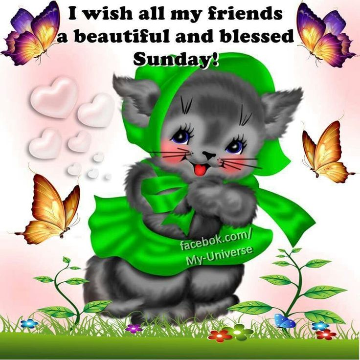 Good Morning Happy Sunday My Friend : Best images about sunday on pinterest