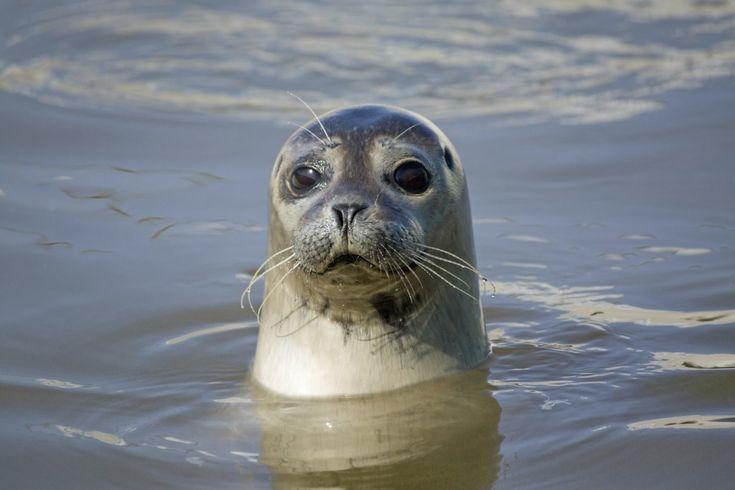 Observation, moment, guide pour voir les phoques de la Baie de Somme