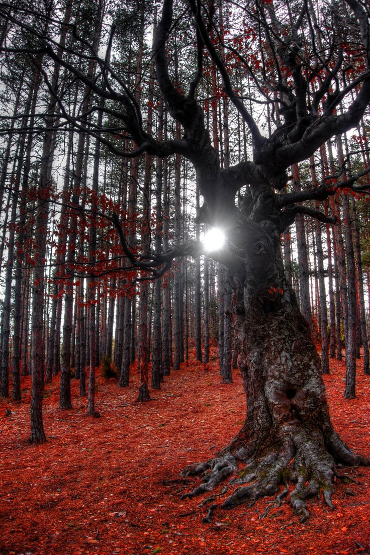 """wowtastic-nature: """" Sunlight through the branches of an old tree on 500px by…"""