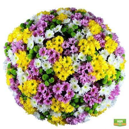 Букет «Корзина из хризантем (101 шт.)» - великолепное легкое облако из сотни разноцветных хризантем. http://flora2000.ru/p/korzina_iz_hrizantem