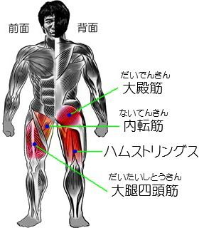 スクワットのやり方~スクワットの正しいやり方 筋肉大全