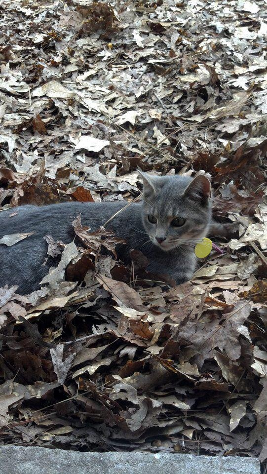 1000+ images about Pets currently missing in Alabama on ...