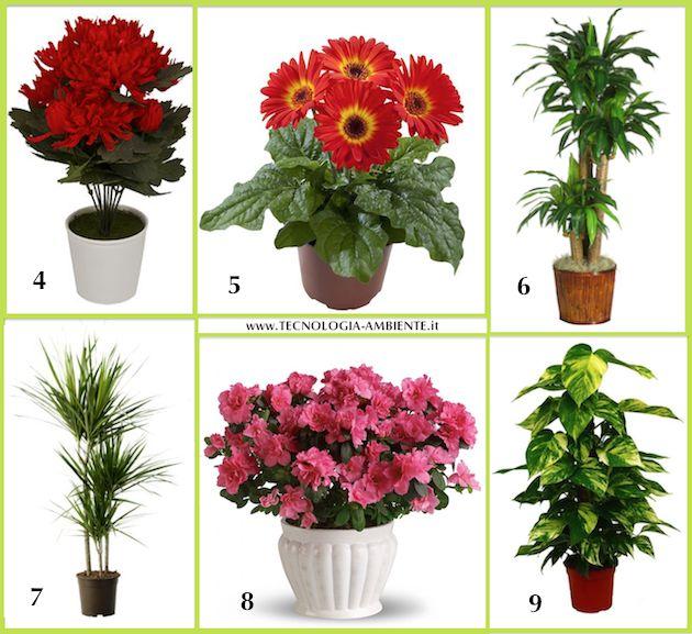 Oltre 25 fantastiche idee su arredamento piante da interni - Piante da interno purifica aria ...