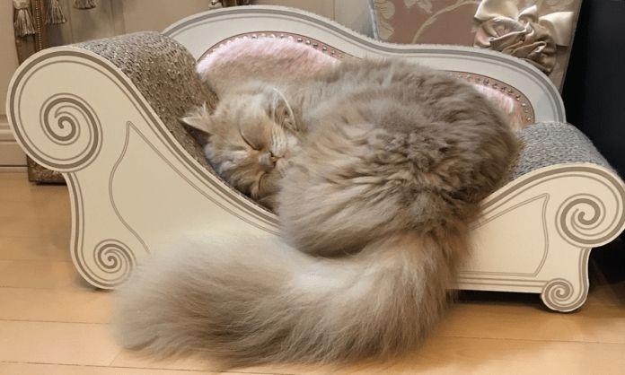 Que opinan de este sofá catuno?#petsbeds #gimnasio #gimnasioparagatos #gato #mascotascolombia #gatos #gatoscolombia #gimnasiodegato #minino #mascota #catlove #catlover #bogota #bogotamoda #medellin no olvides visitarnos en facebook https://goo.gl/SoxhHJ #gatosbuenavida #gatosbonnevie #catbonnevie