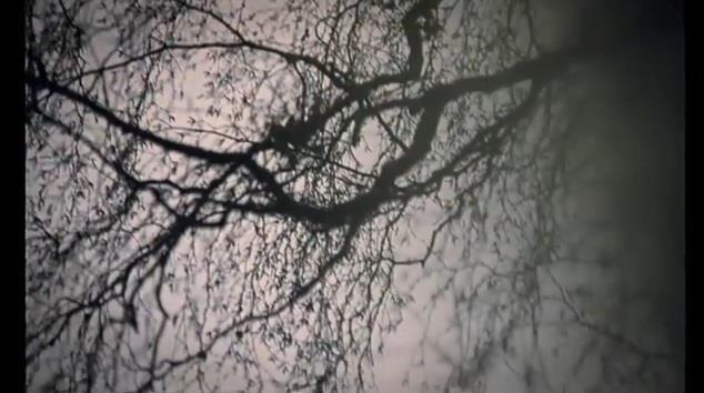 Through tree branches.