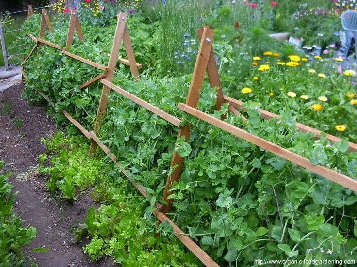 Need this for my peas and beans this spring