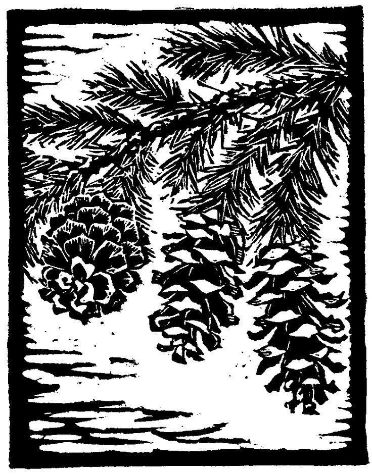 "Trees of Yosemite (1932, 1948), ""Mountain Hemlock,"" by Mary Curry Tresidder"