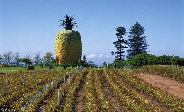 On South Africa's Eastern Cape, a 55-foot fibreglass pineapple offers panoramic views of t...