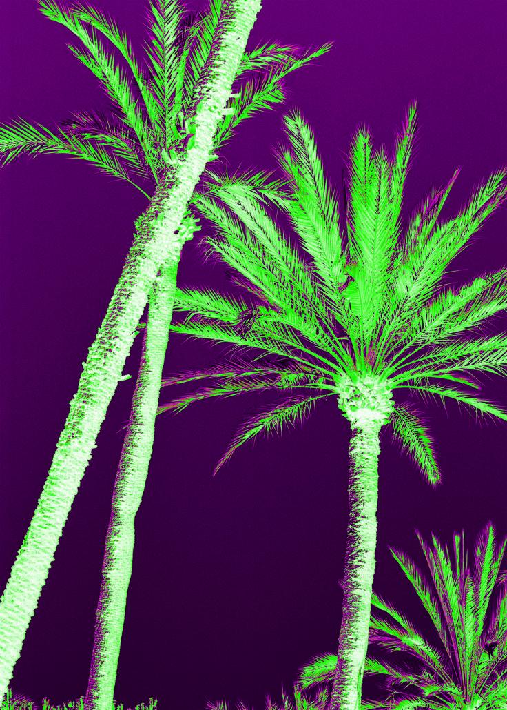 #palmtree #SouthofFrance photo by Anais Boileau for @ateliersdenimes