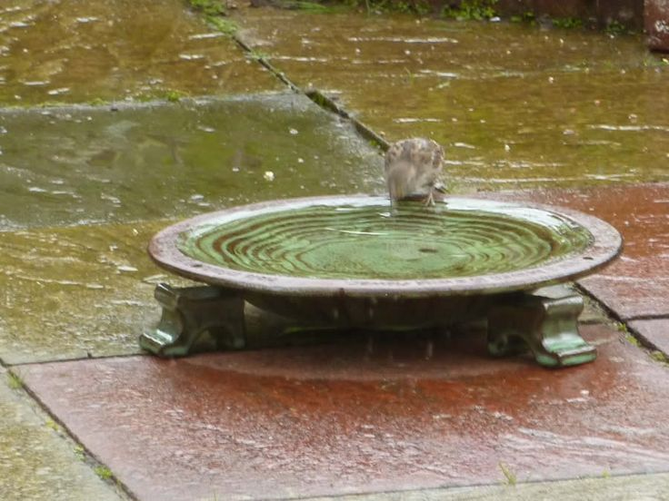 314 Best Bird Bath Images On Pinterest Bird Baths