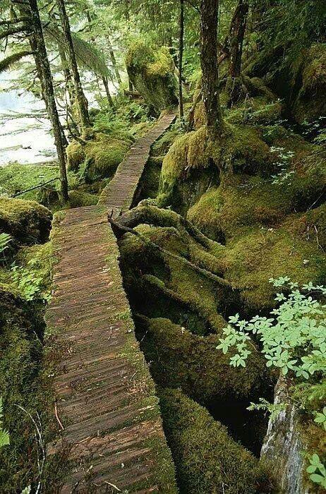 Hoh Rainforest, Washington by Dani Rose