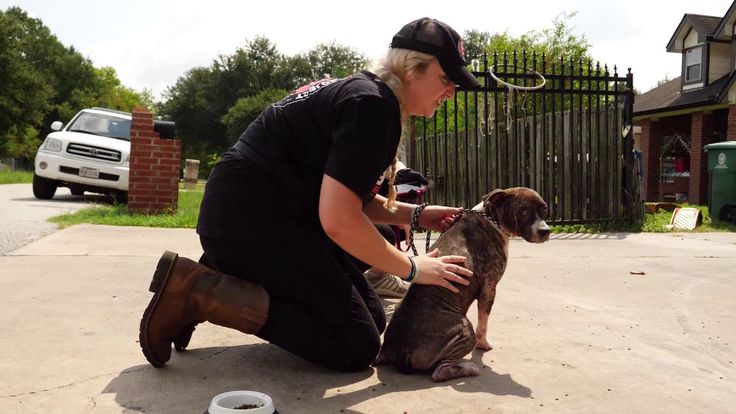 Hurricane Harvey Dog Rescuers From Beagle Freedom Project Help Houston K-911 Rescue Stray Dogs