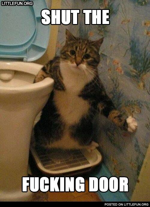 Shut the f**king door. Cat in the toilet.  OMG I seriously can't stop laughing and yet I have no idea why this is so funny to me LMAO! #funnyanimalsca…
