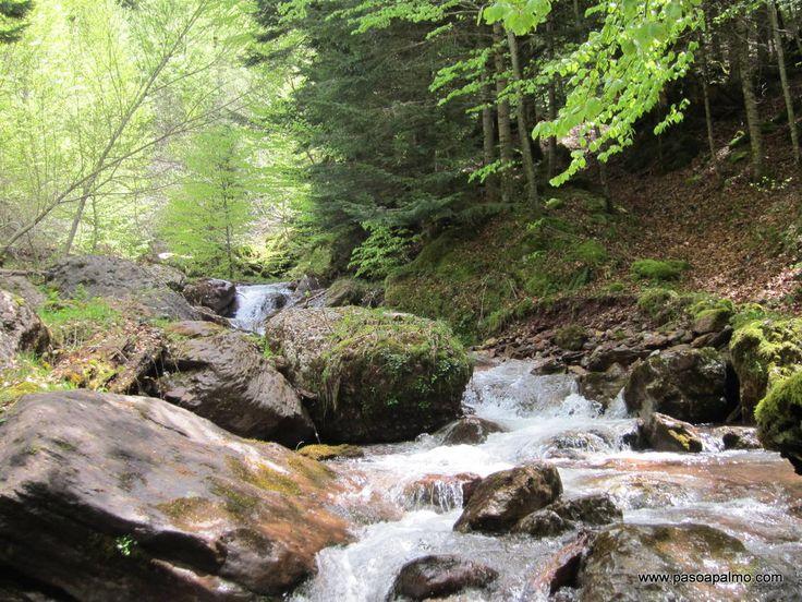 http://www.pasoapalmo.com/jacetania/valle-de-hecho/excursiones/selva-de-oza