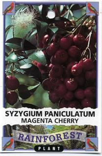 Magenta Cherry - Australian bush food plant. Can be grown in cool climate locations.