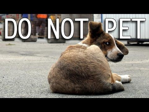 Don't Pet the Puppies - What Happened to the Radioactive Animals of Chernobyl? - YouTube