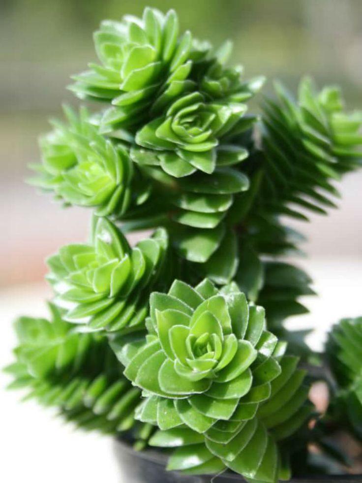 Miniature Garden Videos