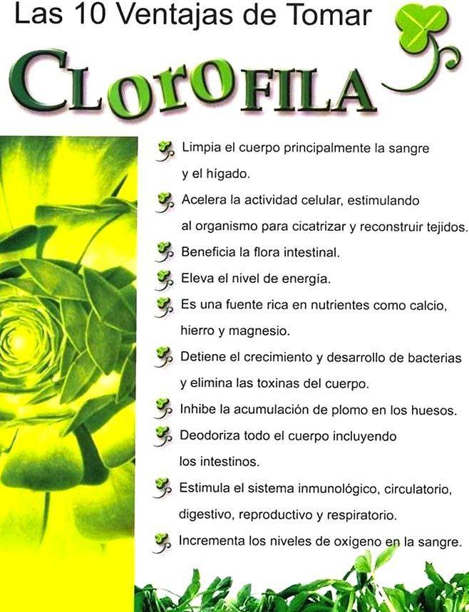 La clorofila es uno de los componentes esenciales de las plantas, es producto de la fotosíntesis, y ofrece una variedad de propiedades para la salud de las