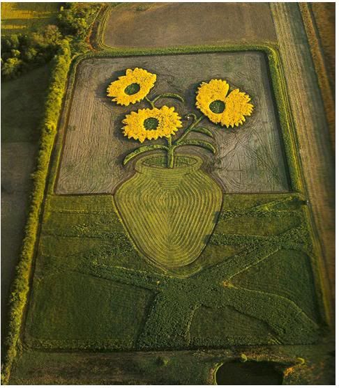 Stan Herd - Crop Art / Sunflower Still Life, Personal Piece. Photo by Jon Blumb.