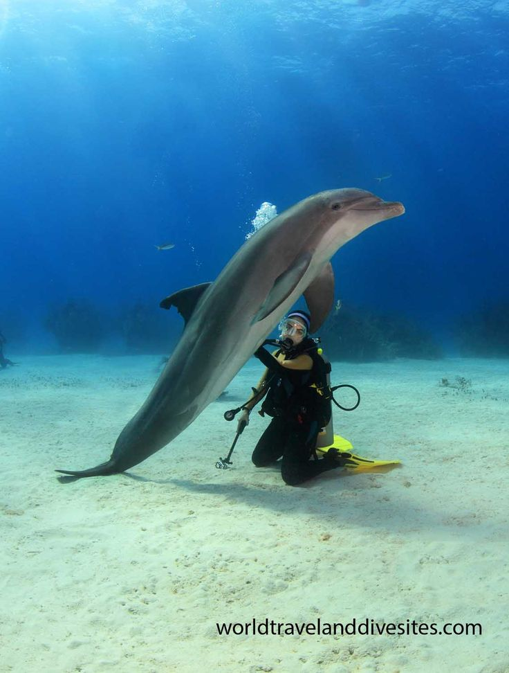 Dolphin dive with UNEXSO, Grand Bahama