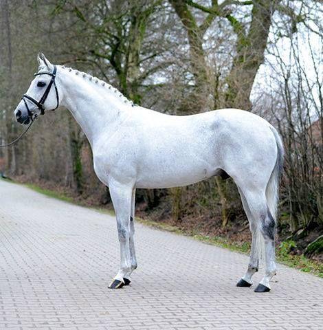 akingdomofhorses:  125/⚜ Gorgeous Thoroughbreds  Scyris, 2000 Polish Thoroughbred Stallion