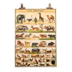 Vintage Animal Chart Poster