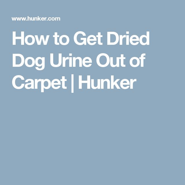 how to clean dried dog pee out of carpet
