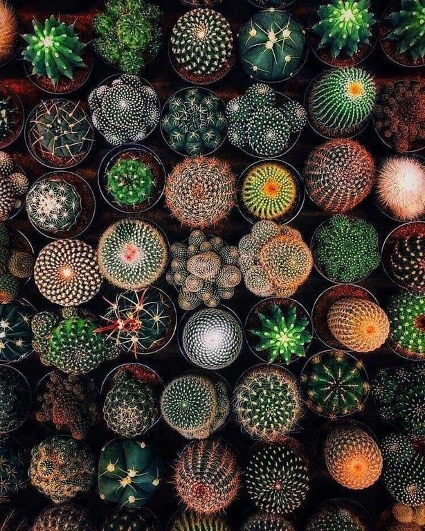 Different Kinds Of Cactus Plant Oddlysatisfying Kinds Of