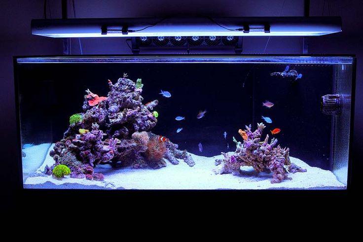 , Saltwater Aquariums, Reef Central, Reef Aquariums, Minimalist ...