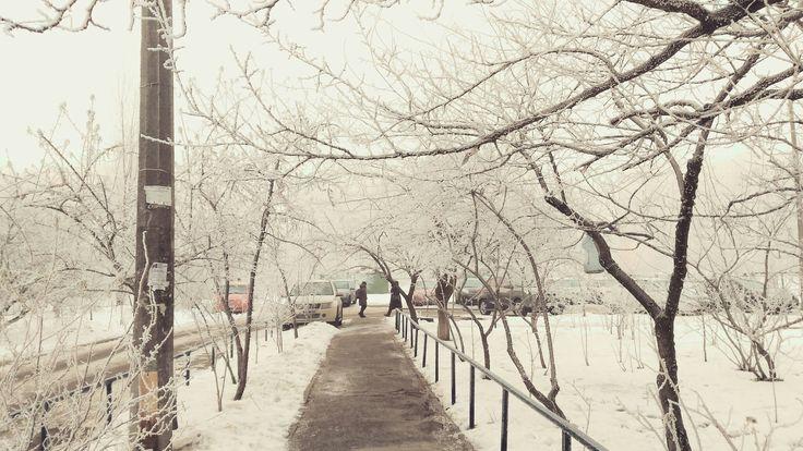 Туманная зима в Киеве