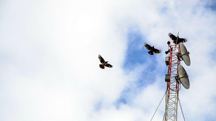 Base #crow #sky #bird #antenna