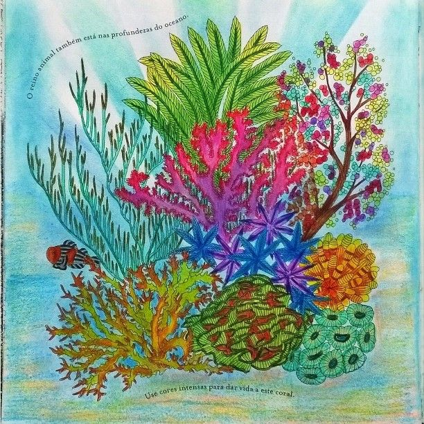 Coloring Books Pages Color Inspiration Animal Kingdom Johanna Basford Stencil Coral Lamb Book Chance